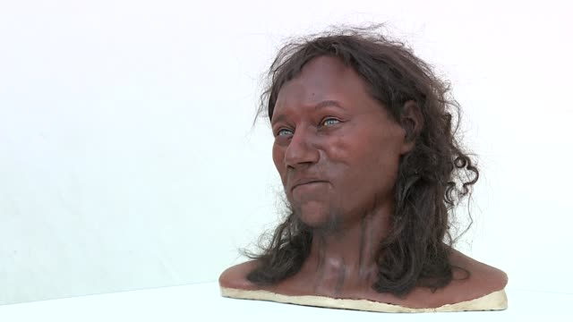 Cheddar Man DNA analysis finds first modern Britons had 'dark to black skin' ENGLAND INT Facial reconstruction of Cheddar Man on display