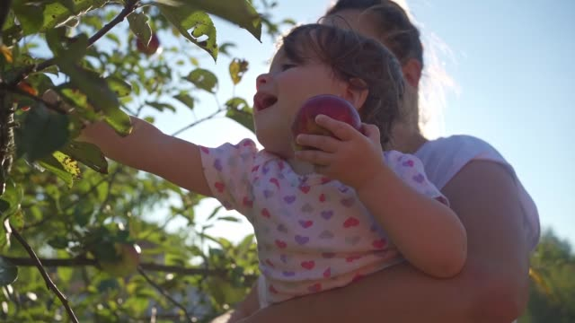 cheerful baby girl picking apples with mother in summer - tranquility stock videos & royalty-free footage