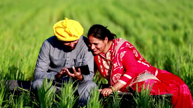 cheerful couple using ipad in the nature - punjab india stock videos and b-roll footage