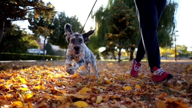 cheerful dog and it's owner running in a park - autumn stock videos & royalty-free footage