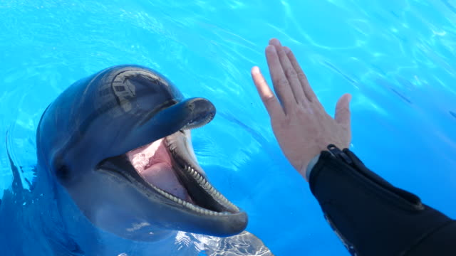cheerful dolphin plays with a human hand - dolphin stock videos & royalty-free footage