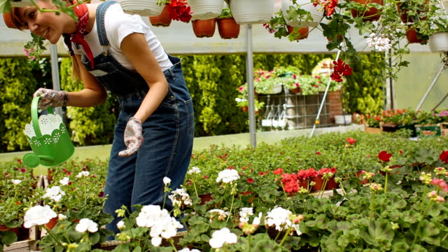 HD: Cheerful Female Florist Watering Plants in a greenhouse.