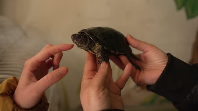 fröhliche besucherin streichelt die exotische schildkröte im tierrettungszentrum - landschildkröte stock-videos und b-roll-filmmaterial