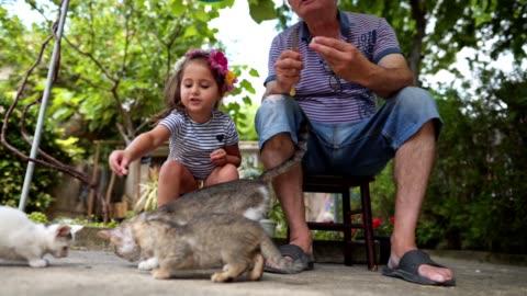 vídeos y material grabado en eventos de stock de chica alegre y su abuelo disfrutando de alimentar gatos al aire libre - nieto
