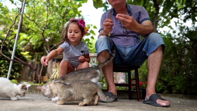 vídeos y material grabado en eventos de stock de chica alegre y su abuelo disfrutando de alimentar gatos al aire libre - abuelos