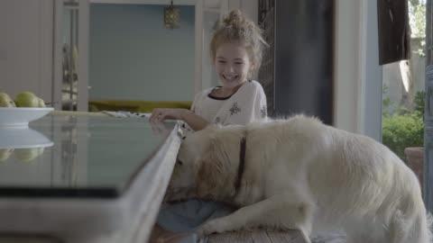 vídeos y material grabado en eventos de stock de cheerful girl feeding golden retriever at home - mesa de comedor