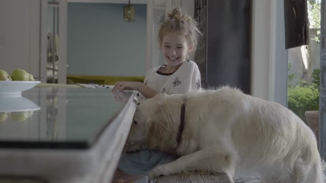 cheerful girl feeding golden retriever at home - 前ボケ点の映像素材/bロール