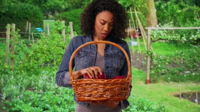 cheerful woman farmer posing for portrait with basket of shiny, delicious apples - red delicious stock videos & royalty-free footage
