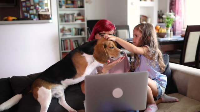 vidéos et rushes de femme gaie utilisant son temps libre du travail pour passer un certain temps avec sa fille et le chien de beagle - young animal