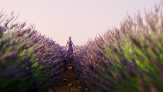 ws cheerful woman walking in a lavender field - softness stock videos & royalty-free footage