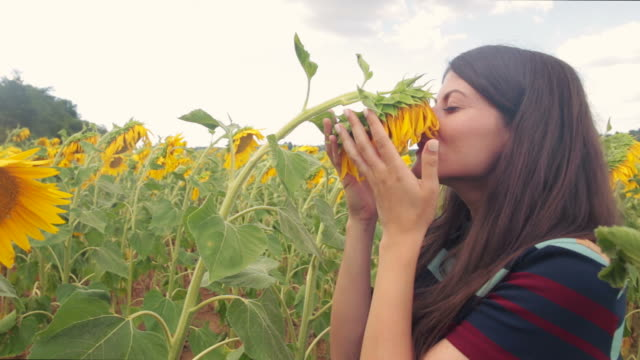 vídeos de stock e filmes b-roll de cheerful woman with sunflowers. - olfato