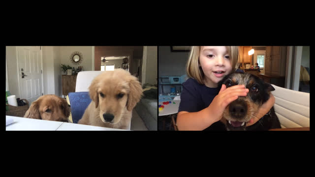 vídeos de stock, filmes e b-roll de cheerful young girl encourages her dog to look at her computer screen during a video call with two other dogs (audio) - dono de animal doméstico