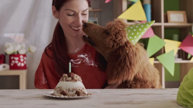 cheerful young woman blowing the birthday candle of her dog's cake - party hat stock videos & royalty-free footage