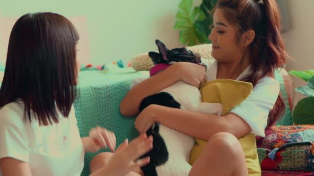 vidéos et rushes de gai, chien de carlin à la maison - en désordre