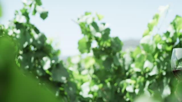 cheers to us - vineyard stock videos & royalty-free footage