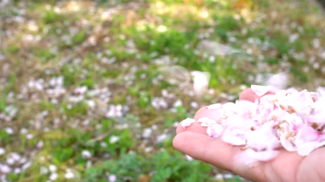 cheery blossom aka sakura leaf blown by wind from hand - petal stock videos & royalty-free footage