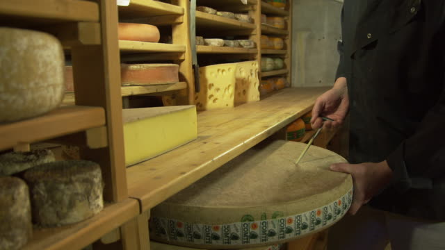 MS cheese maker checking cheese in maturing cellar by taking a sample with a probe and tasting it