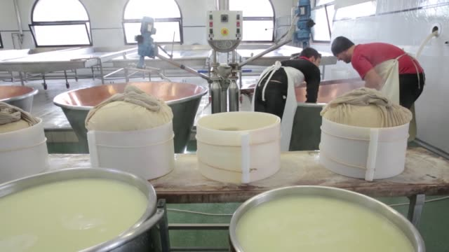 cheese makers pull cheese blobs from the vats using a length of cloth and force them them into chees molds parmigiano reggiano cheeses production... - parmigiano video stock e b–roll