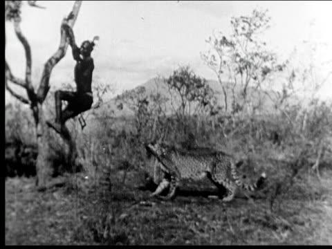 1941 Cheetah chasing man up tree