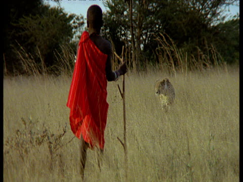 cheetah skulks though savanna past maasai boy wearing red robe and holding stick - confrontation stock videos & royalty-free footage