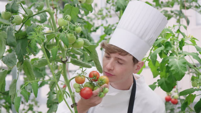 chef at smelling unripe tomatoes in greenhouse - chef's hat stock videos & royalty-free footage