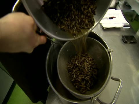 Chef cooking with insects in kitchen
