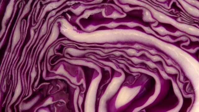 chef slicing purple or red cabbage with khife on cutting board.4k dci slowmotion. - red cabbage stock videos & royalty-free footage