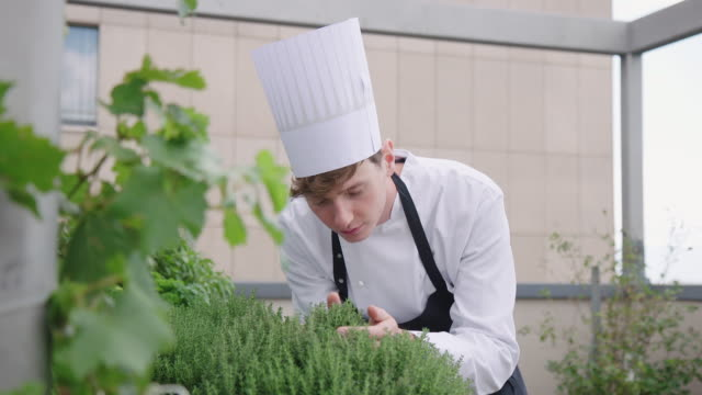 chef smelling herb plants in organic garden - chef's hat stock videos & royalty-free footage