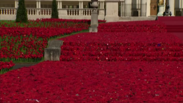 chelsea flower show 2016: display of handmade poppies at royal hospital chelsea; england: london: chelsea: royal hospital chelsea: ext display of... - festival dei fiori di chelsea video stock e b–roll