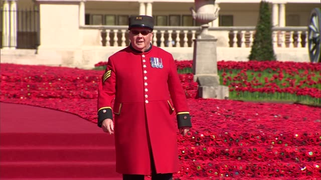 chelsea flower show 2016: display of handmade poppies at royal hospital chelsea; england: london: chelsea: ext general views carpet of crotcheted... - chelsea flower show stock videos & royalty-free footage