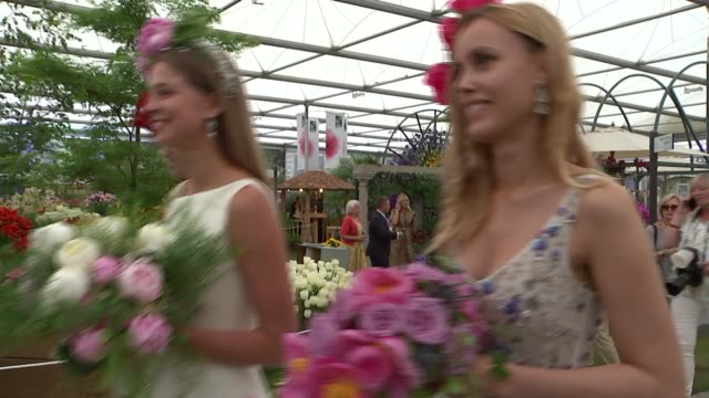 chelsea flower show 2018: displays; england: london: chelsea: int various of flowers on display ext chelsea pensioner along using mobility scooter /... - festival dei fiori di chelsea video stock e b–roll
