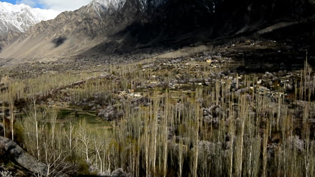 Cherry and apricot blossom in Hunza valley,Pakistan