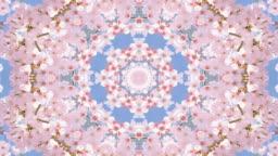 Cherry blossom against blue sky in spring kaleidoscope