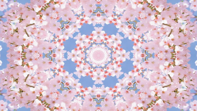 Cherry blossom against blue sky in spring kaleidoscope