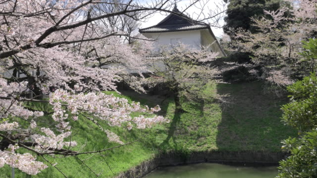 cs ws slo mo cherry blossom and japanese architecture in chidorigafuchi park, tokyo, japan - cherry blossom stock videos & royalty-free footage