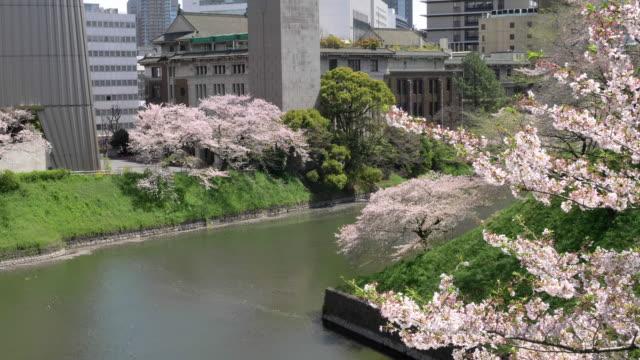 cs ws slo mo cherry blossom and moat in chidorigafuchi park, tokyo, japan - moat stock videos & royalty-free footage