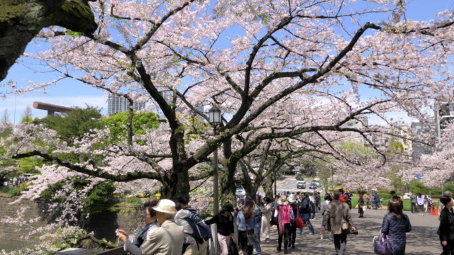 ds ms slo mo cherry blossom and visitors in chidorigafuchi park, tokyo, japan - tokyo japan stock videos & royalty-free footage