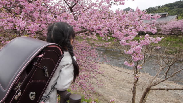 Cherry Blossom and Young Japanese girl with Japanese satchel