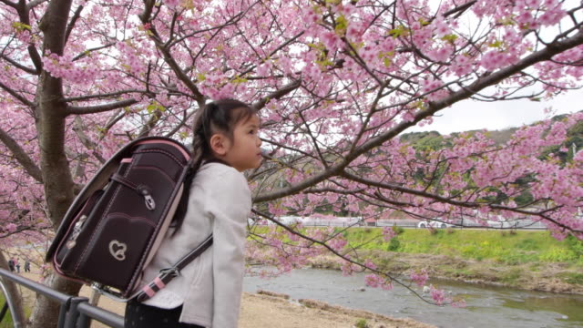 cherry blossom and young japanese girl with japanese satchel - satchel stock videos & royalty-free footage