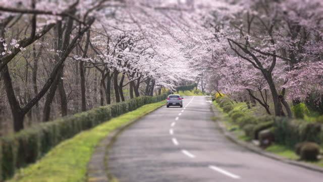 cherry blossom  arch -4k- - springtime stock videos & royalty-free footage