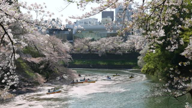 Kirschblüte am Canal Grande, Japan