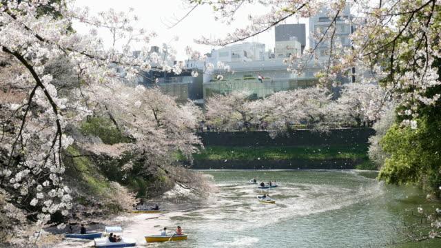 大運河、日本で花見会 - 運河点の映像素材/bロール