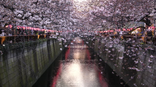 cherry blossom  at meguro canal in tokyo - japan stock videos and b-roll footage