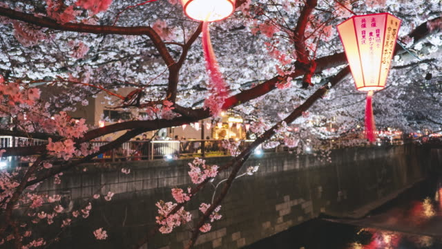 cherry blossom at meguro river time lapse - lantern stock videos & royalty-free footage