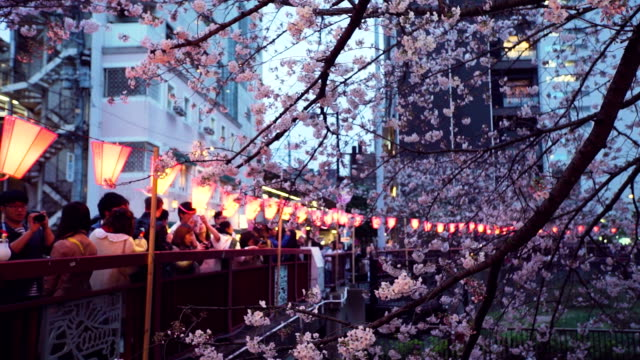 cherry blossom at meguro river. tokyo, japan - kanto region stock videos and b-roll footage