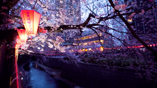 cherry blossom at meguro river. tokyo, japan - japan stock videos & royalty-free footage