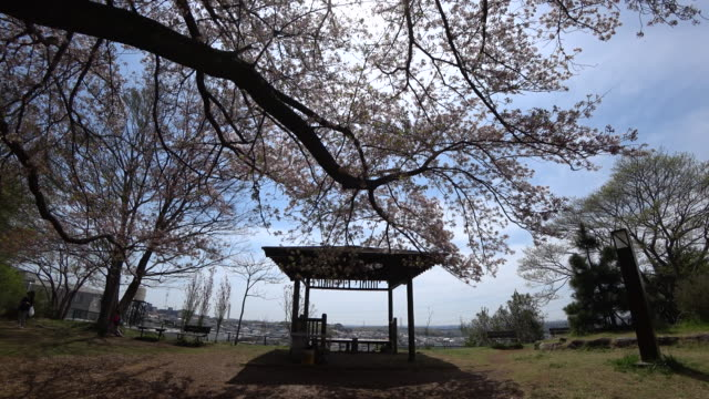 cherry blossom at yoyogi park, tokyo japan - kanto region stock videos and b-roll footage