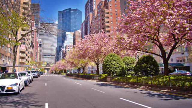 cherry blossom bloom on 6th avenue in the spring. growth after the pandemic, conceptual symbol of recovering economy - high street stock videos & royalty-free footage