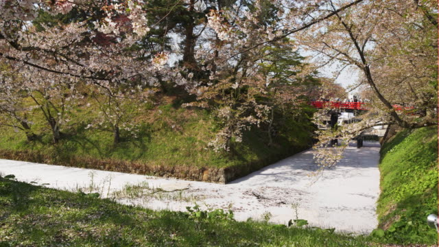 cherry blossom fallen petals in hirosaki - satoyama scenery stock videos and b-roll footage
