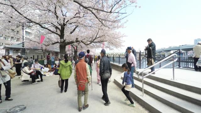 cherry blossom festival in tokyo - randoseru stock videos & royalty-free footage